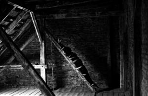 at the attic